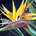 Bird Of Paradise by Jacqueline Endlich