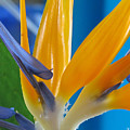 Bird Of Paradise by Kathie McCurdy