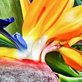 Bird Of Paradise  by Kirsten Giving