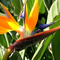 Bird Of Paradise by Mary Deal