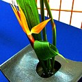 Bird Of Paradise On Blue by Mindy Newman