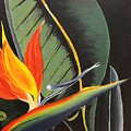 Bird Of Paradise by Peggy Derrico