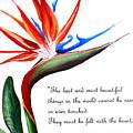 Bird Of Paradise Poem by Karin  Dawn Kelshall- Best