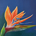 Bird Of Paradise by Roberta Landers