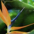 Bird Of Paradise by Teresa Wilson