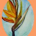 Bird Of Paridise by Mikki Alhart