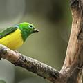Bird Of Peru by Flavio Huamani Quejia