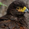 Bird Of Prey by Wolfgang Stocker