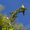 Bird On A Branch by Jeff Cutler