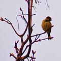 Bird On A Bud by Bill Cannon