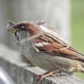 Bird On A Fence by Melissa Brodnax