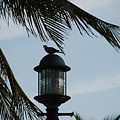 Bird On A Light by Rob Hans