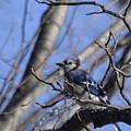 Bird On A Limb by Ron Hebert