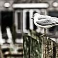 Bird On A Pole by Tim Wilson