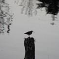 Bird On A Stump by Modern Art