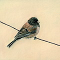 Bird On A Wire by Carla Armbrust