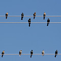 Bird On A Wire by Christine Till