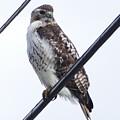 Bird On A Wire by Debbie Storie