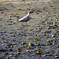 Bird On Beach by Josh Manwaring