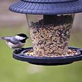 Bird On Feeder by Gary Adkins
