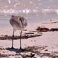 Bird On The Beach by Susan Cliett