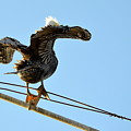 Bird On The Wire by AJ Schibig