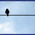 Bird On The Wire by Anna Sheradon