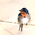Bird On Wire by David Trent