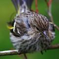 Bird Perch by Stacie Gary