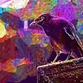 Bird Rain Rest Animals  by PixBreak Art