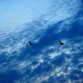 Bird Set Free II  by Adela Hittell