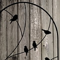 Bird Silhouettes On The Fence by James DeFazio