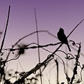 Bird Sings by Angie Tirado