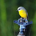 Bird Siting On A Water Sprinkler by David Trent