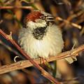 Bird Song by Dianne Cowen