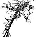 Bird by Stephen Taylor