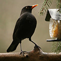 Bird Table by Heike Hultsch