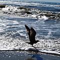 Bird Taking Flight On The Shore by Matt Harang