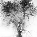 Bird Tree Land Bw Fine Art Print by James BO  Insogna