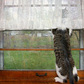 Bird Watching Kitty Cat by Andee Design