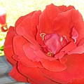 Bird Watching Red Rose by Maxine Billings