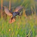 Bird With Prey by Nicola Fusco