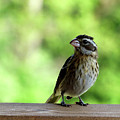 Bird With Punk Attitude by Paula Joy Welter