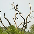 Bird011 by Jeff Downs