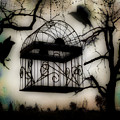 Birdcage by Gothicrow Images