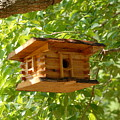 Birdhouse 5 by Joyce StJames