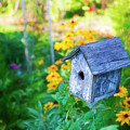 Birdhouse And Flowers by David Arment