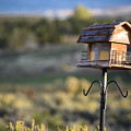 Birdhouse On Stilts by Sharon Wunder Photography