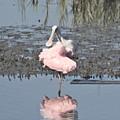 Birdie Ballet by Judith Morris