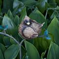 Birdie by Bill Ades